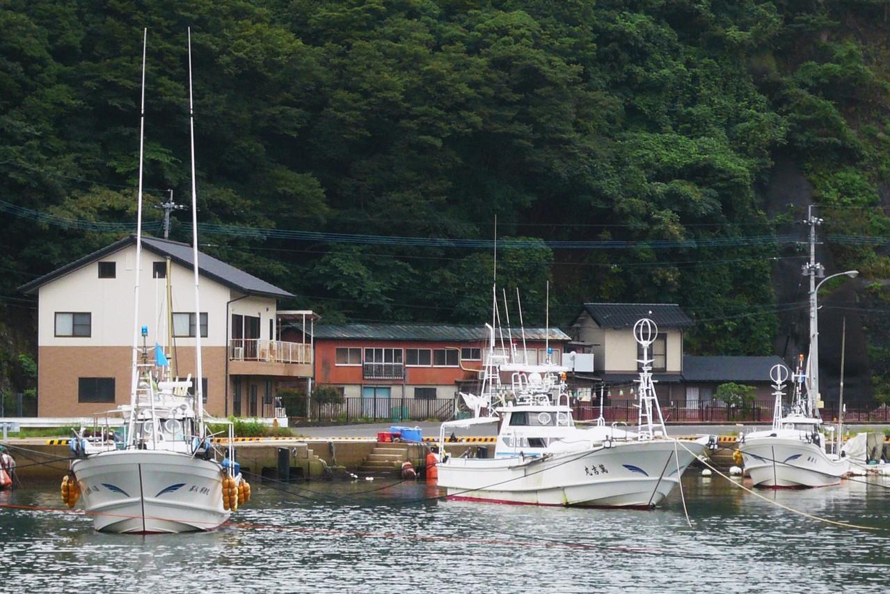 比田勝魚組みんなで 魚組長のリードで 協力して作業します