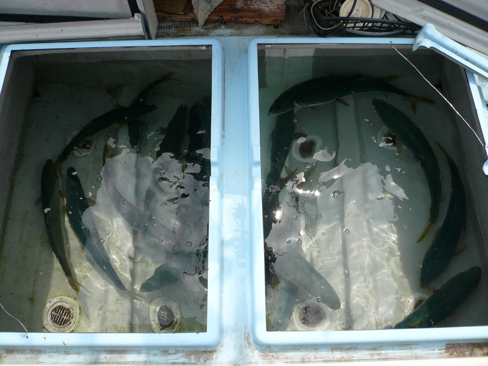 6月24日 (昨日釣れなかった)タイ釣り場(バケモン)のポイント 下げ潮12時30分過ぎまでの今日の釣果