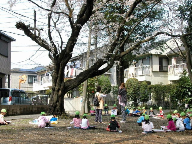 桜の木の下で  撮影者 矢野凱弓