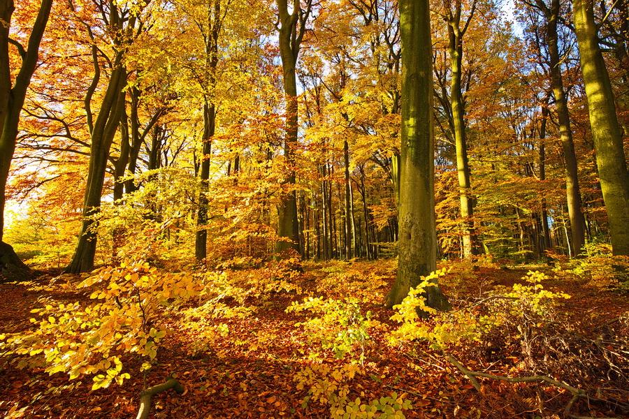 Ein Herbstspaziergang im November 2017.