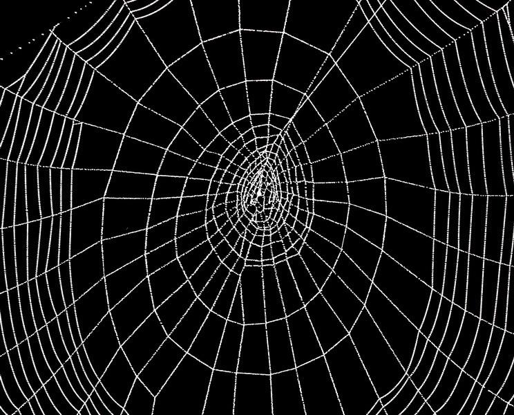 Spinnennetz einmal anders.