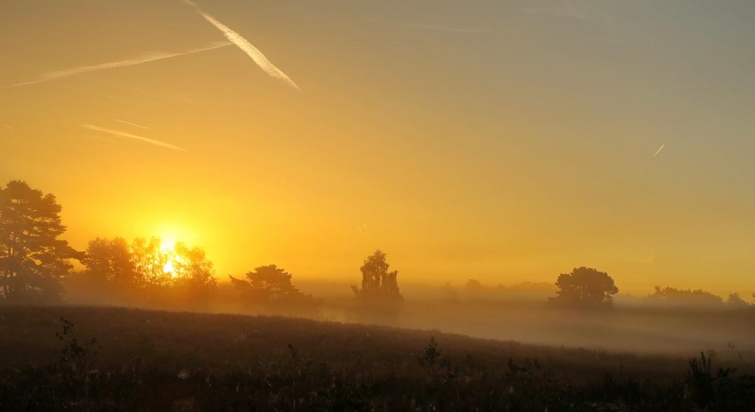 Sonnenaufgang Ende August in der Westruper Heide.