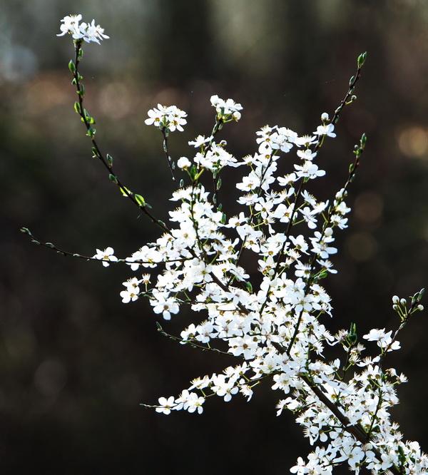 Es ist wieder Frühling.
