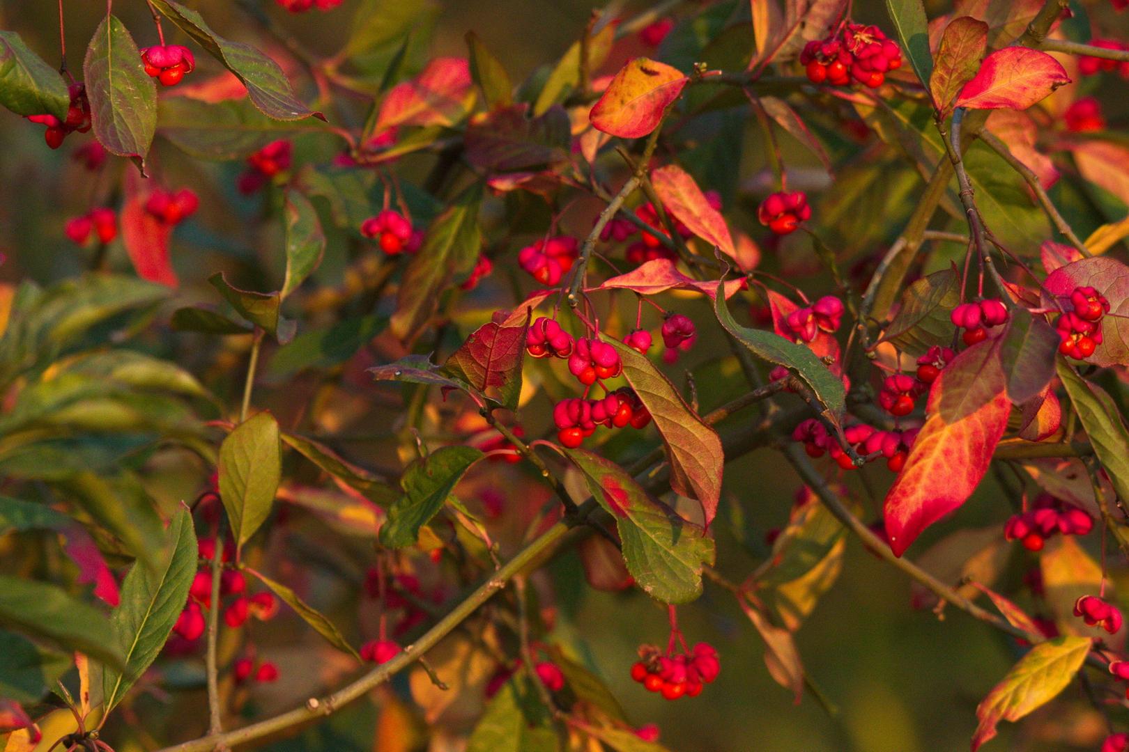 Herbst in Haltern 2020.