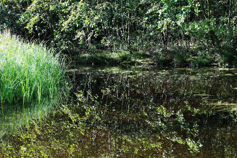 Wasag-Moor