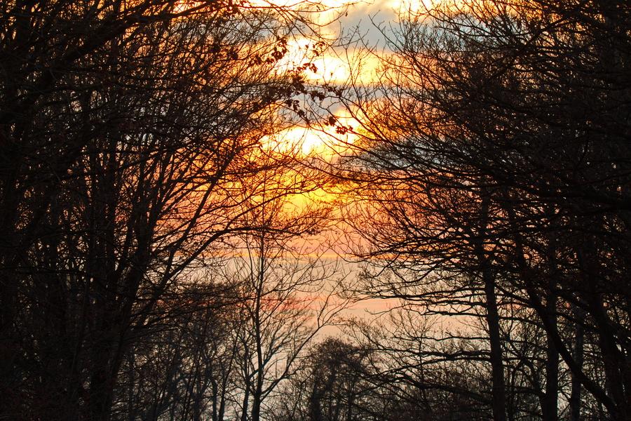 Sonnenuntergang Hervester Bruch im März 2018.