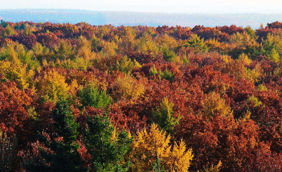 Herbstwald in der Haard vom Feuerwachturm auf dem Dachsberg fotografiert.