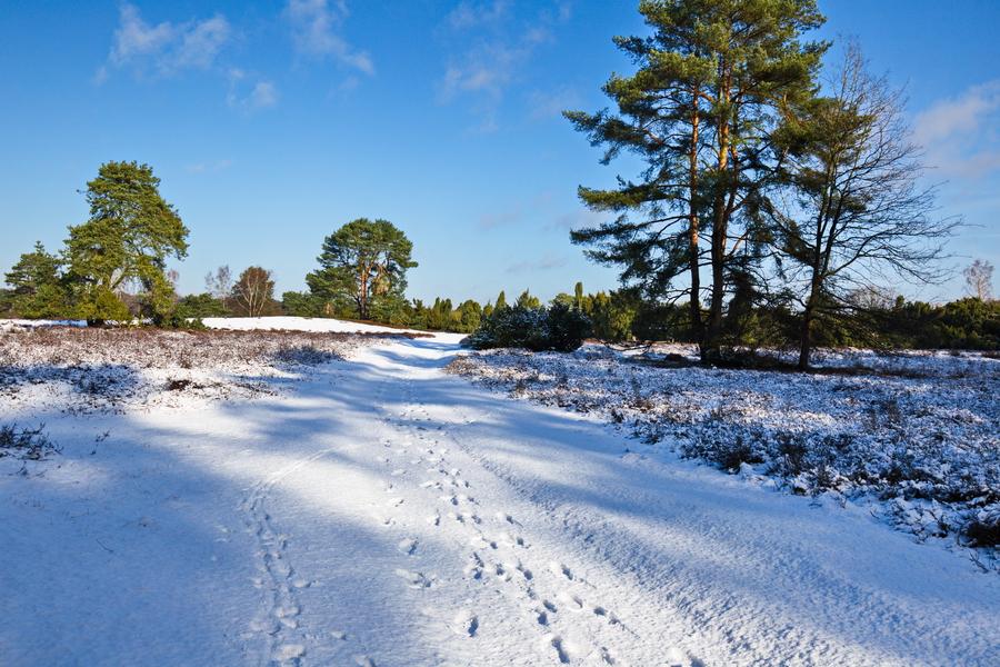 Ein Schneespaziergang in der Westruper Heide Anfang Februar 2018.