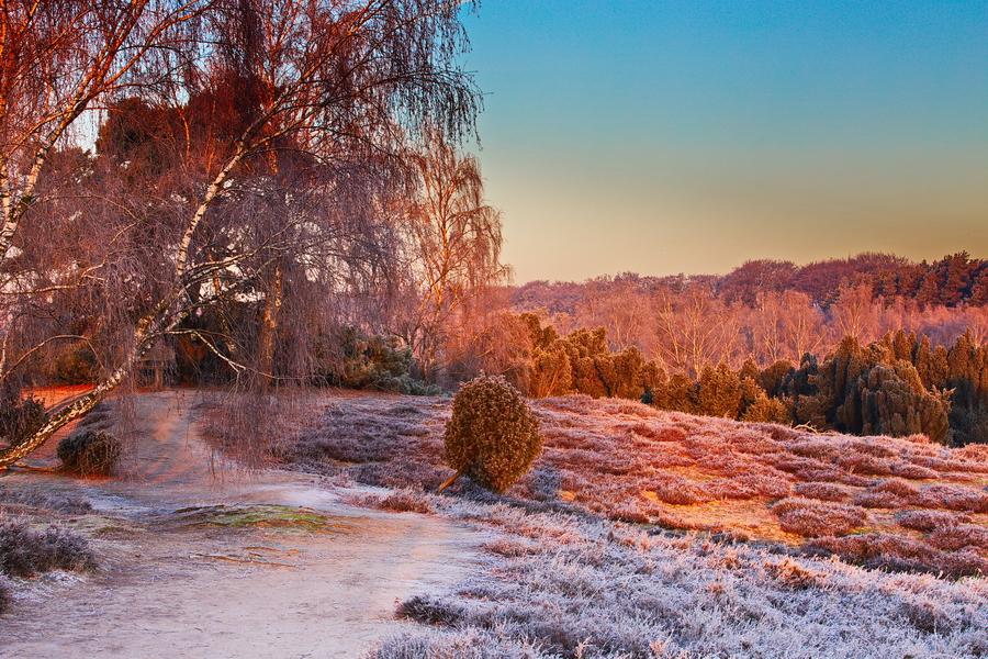 Sonnenaufgang Westruper Heide Mitte Januar 2019.