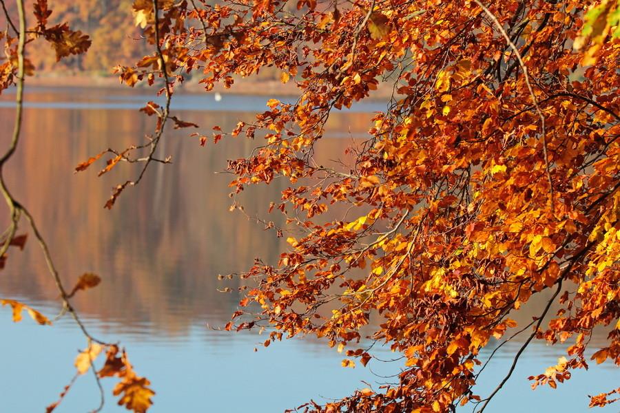 Herbst am Hullerner Stausee