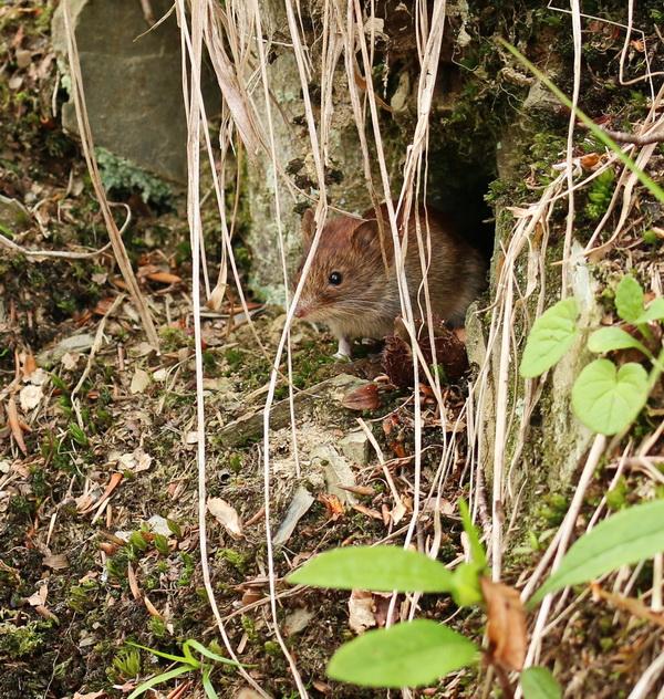 Mäuschen im Sauerland