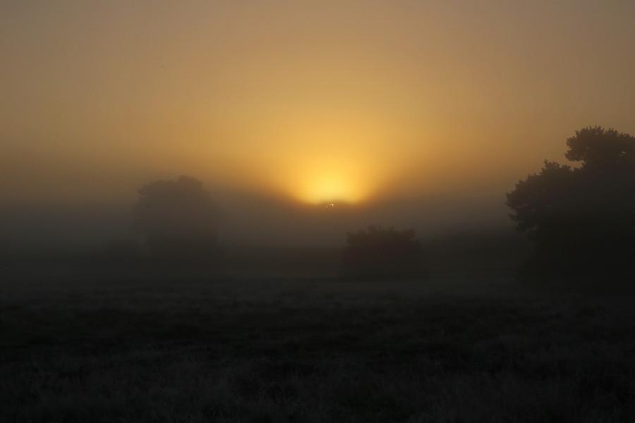 Westruper Heide, Haltern, früh morgens Anfang Oktober.
