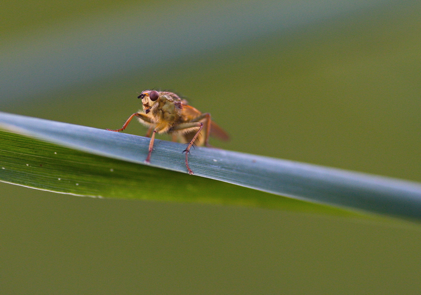 Insekt unbestimmt