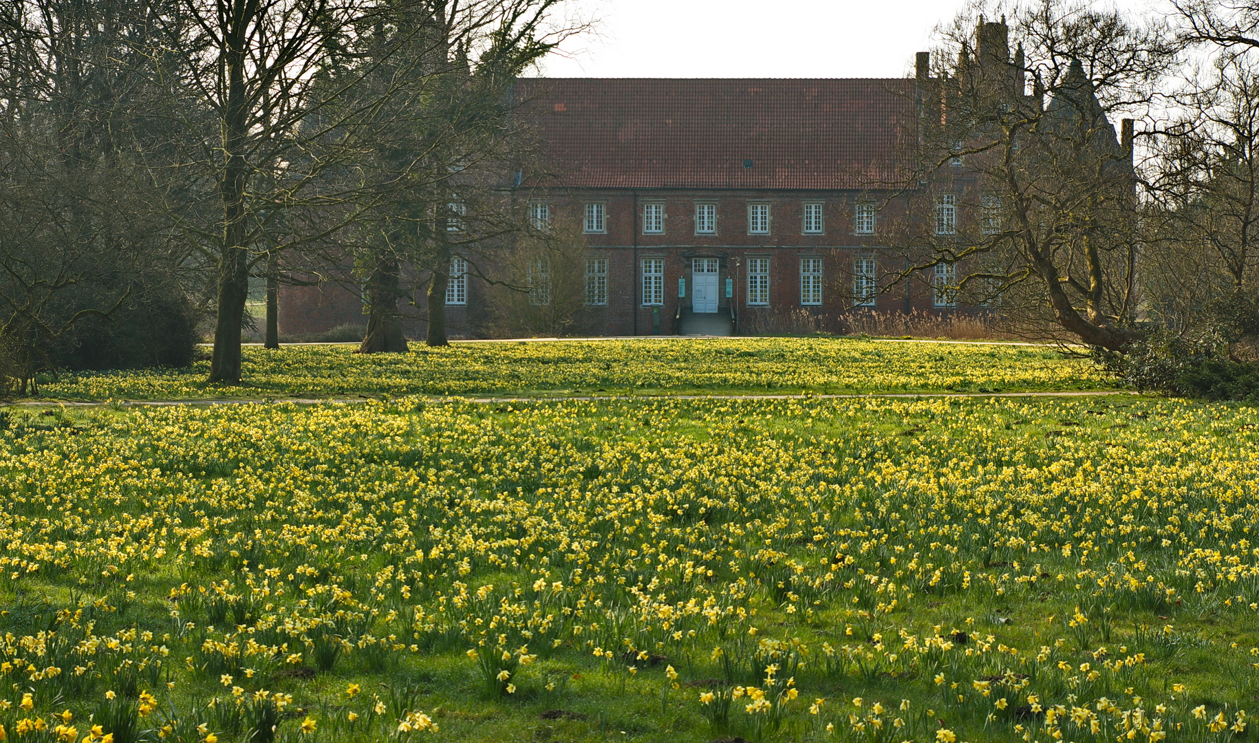 Narzissenwiese im Hertener Schlosspark, Frühjahr 2021.