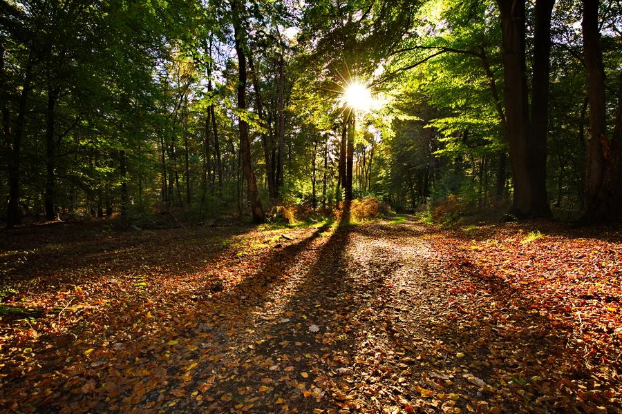 Das Sonnenlicht findet im Herbst noch den Weg durchs Laub der Bäume.