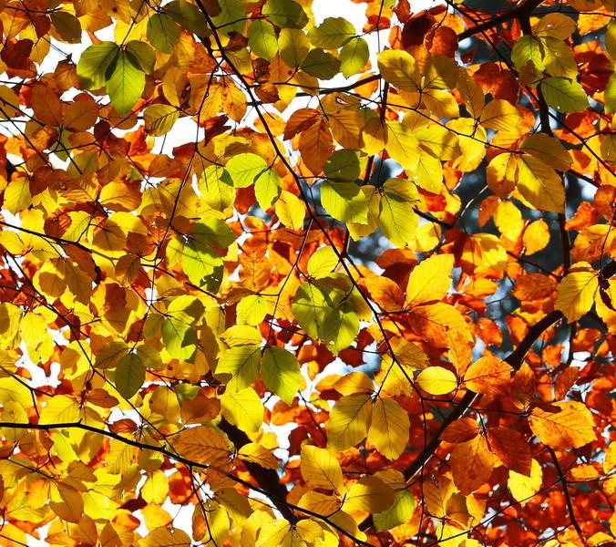 Goldener Herbst in Haltern am See.