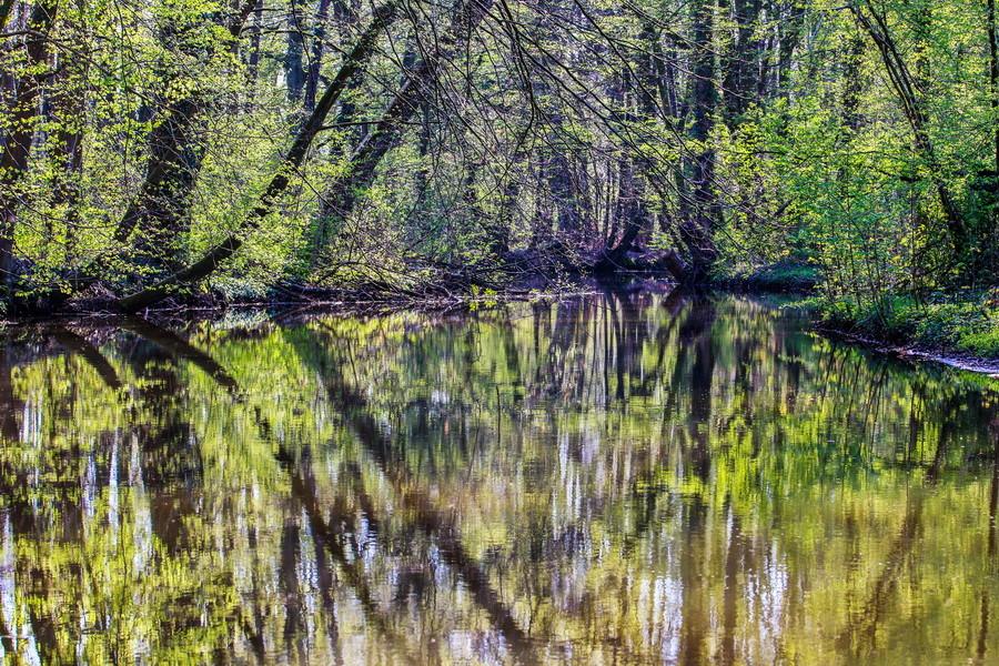 Mühlbach im Frühjahr in Sythen
