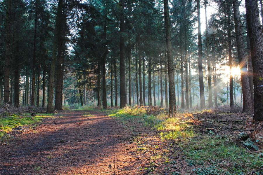 Ein Herbst/Winterspaziergang bei langsam einsetzender Dämmerung