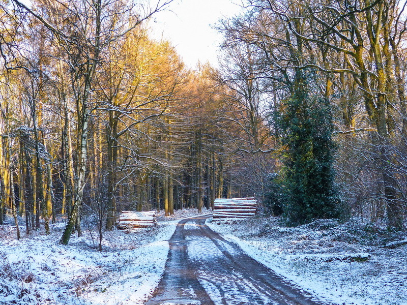 Ein Winterspaziergang in der Hohen Mark