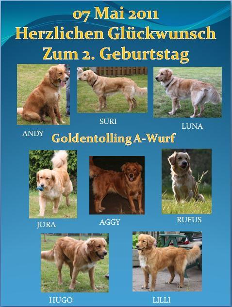 Goldentolling A-Wurf. Zweiter Geburtstag