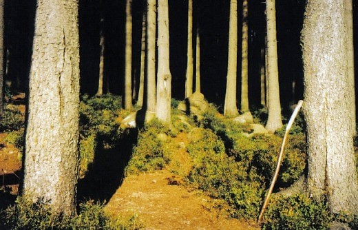 Geheimnisvoller Brockenwald - Heimat der Hexen und Dämonen. Foto HGW