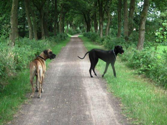 Honden mogen buiten broedseizoen loslopen
