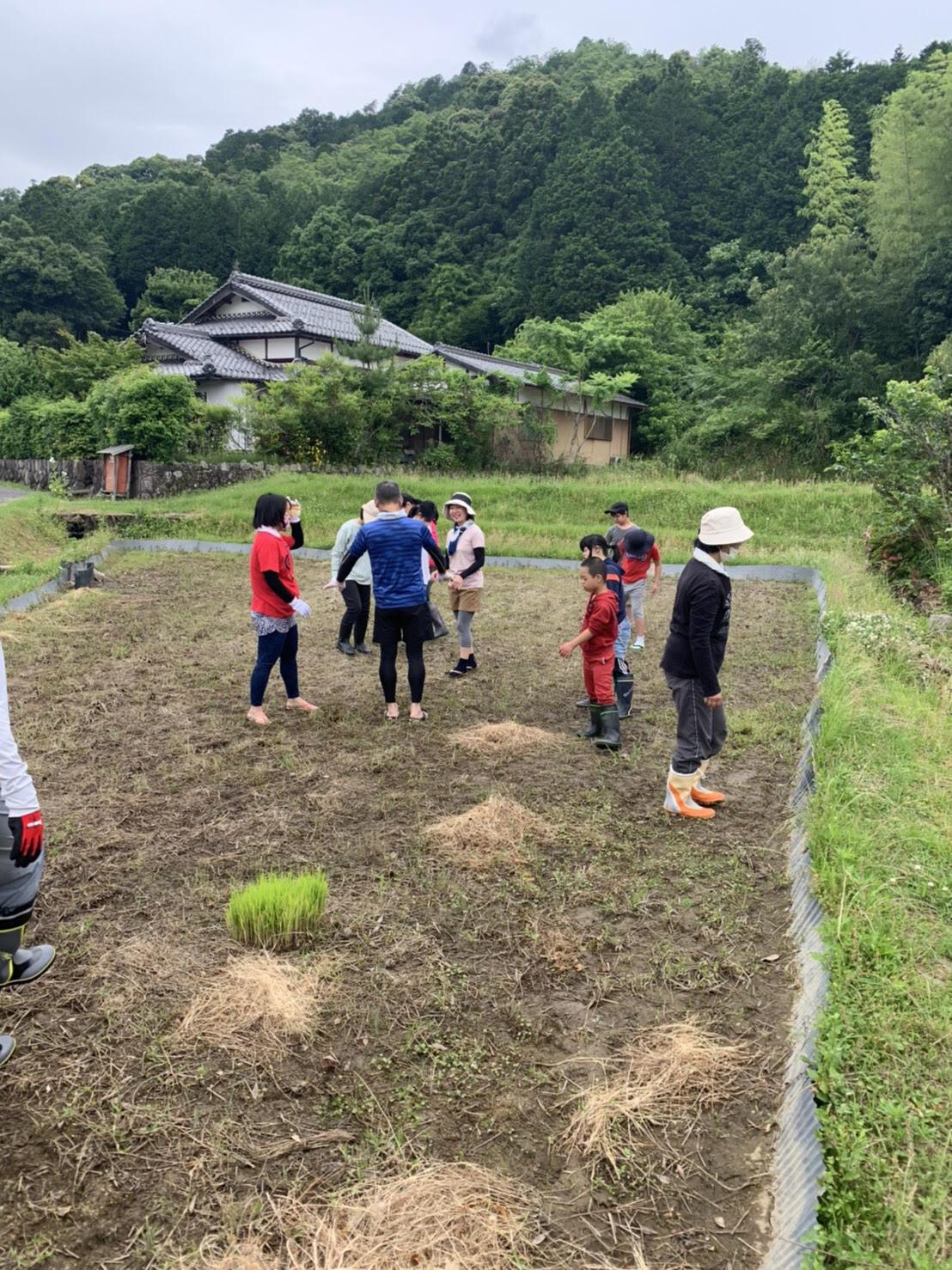 福知山田植え体験