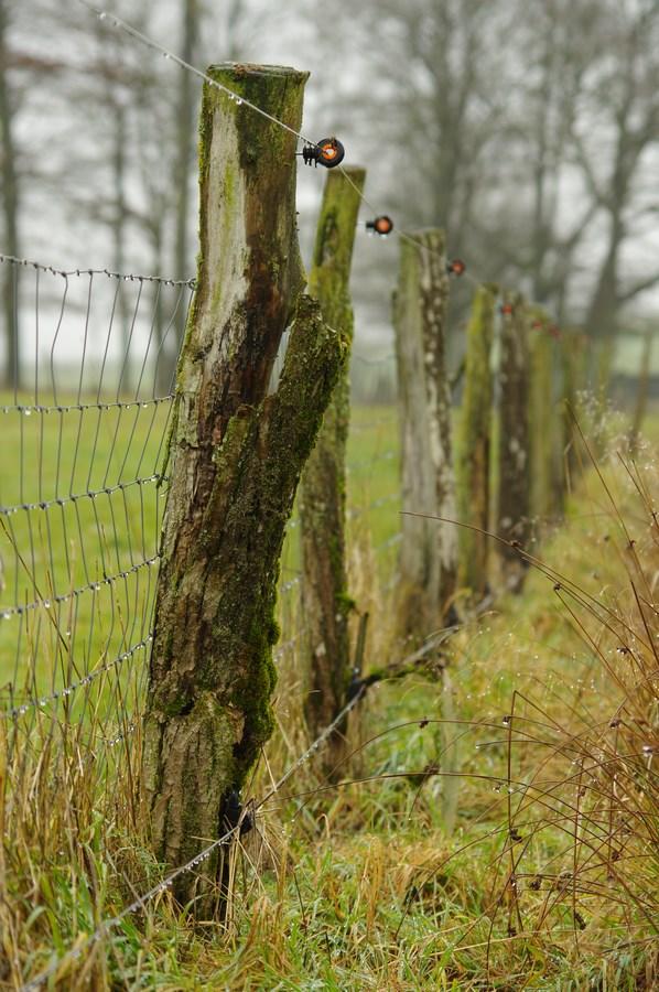 Renforcement d'une clôture existante avec 1 fil électrique en bas et 1 fil en haut