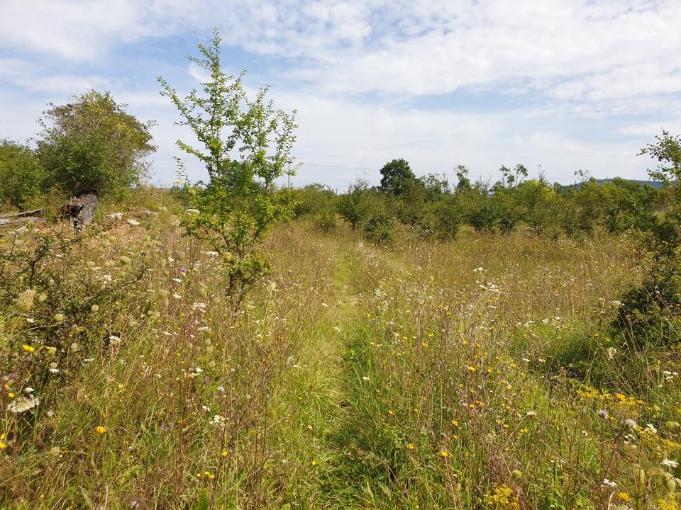 Trail im Naturschutzgebiet