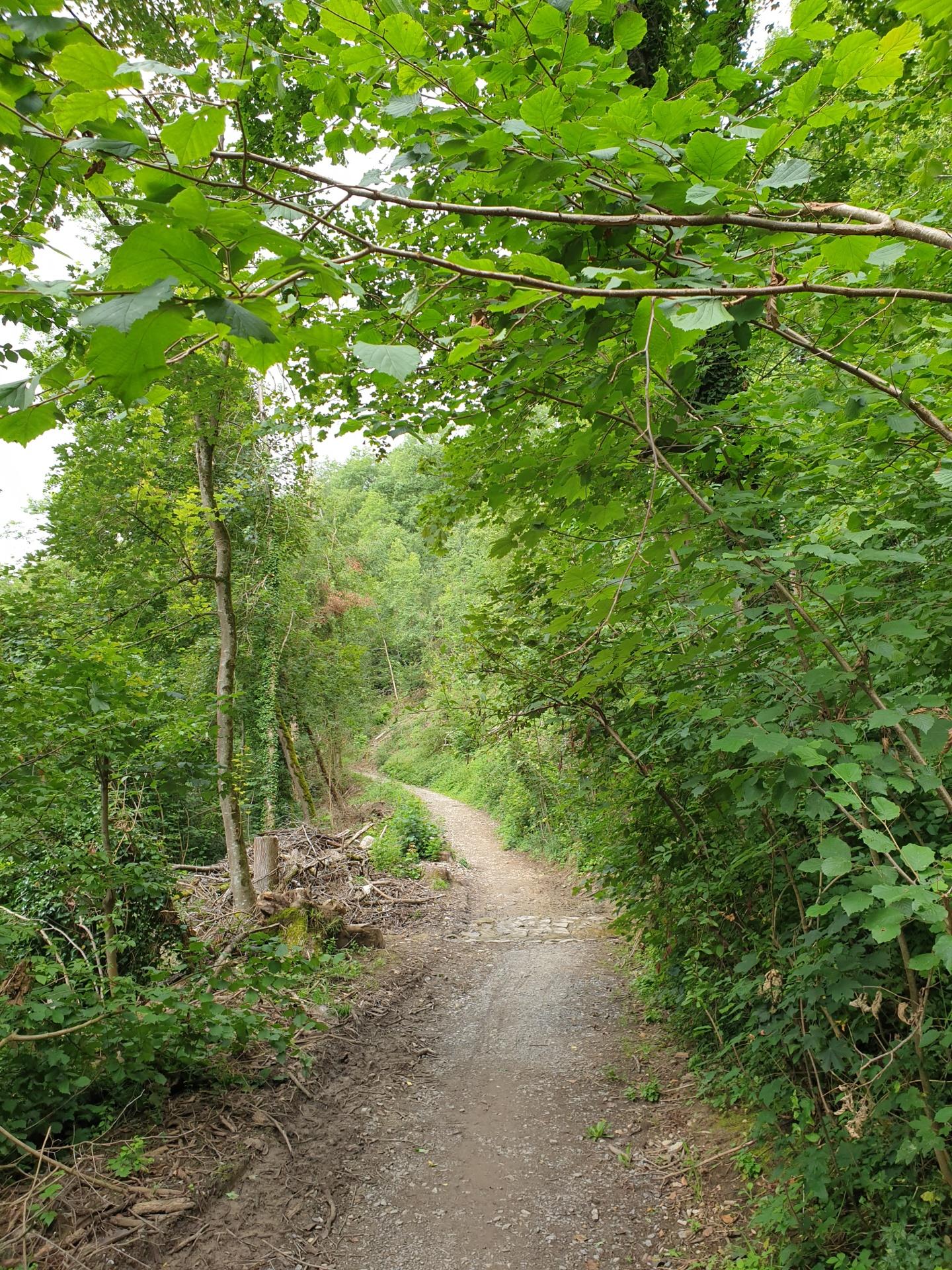 Stromberg-Radroute, steiler Schotterweg!