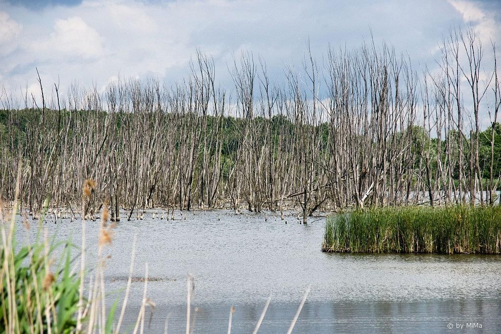 Zeitzeugen gefluteter Seen