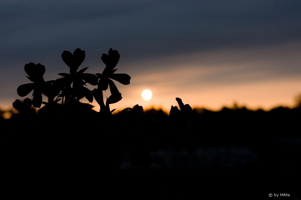 Morgensonne vor der Abreise