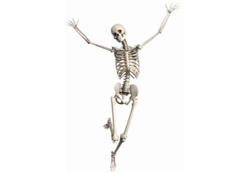 骨や関節にアプローチ