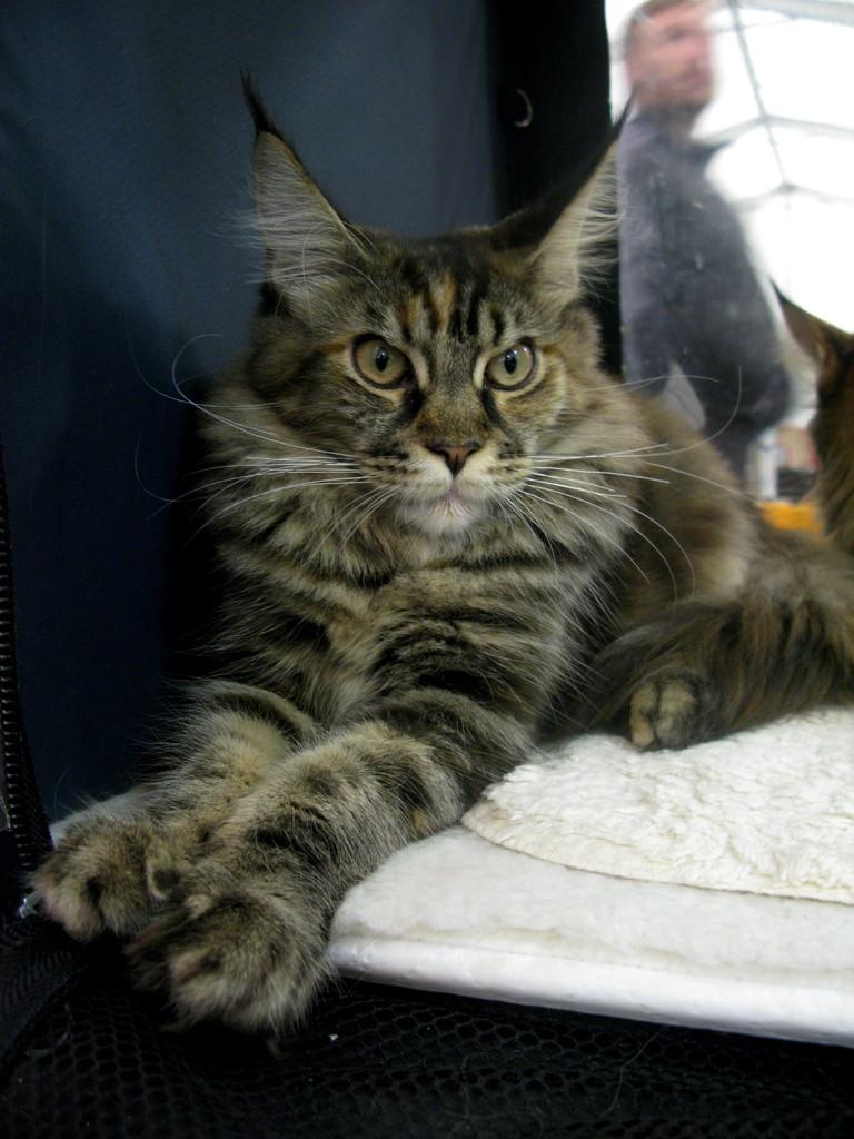 Charisma UA * OdeSea Cat (почти 6 месяцев)
