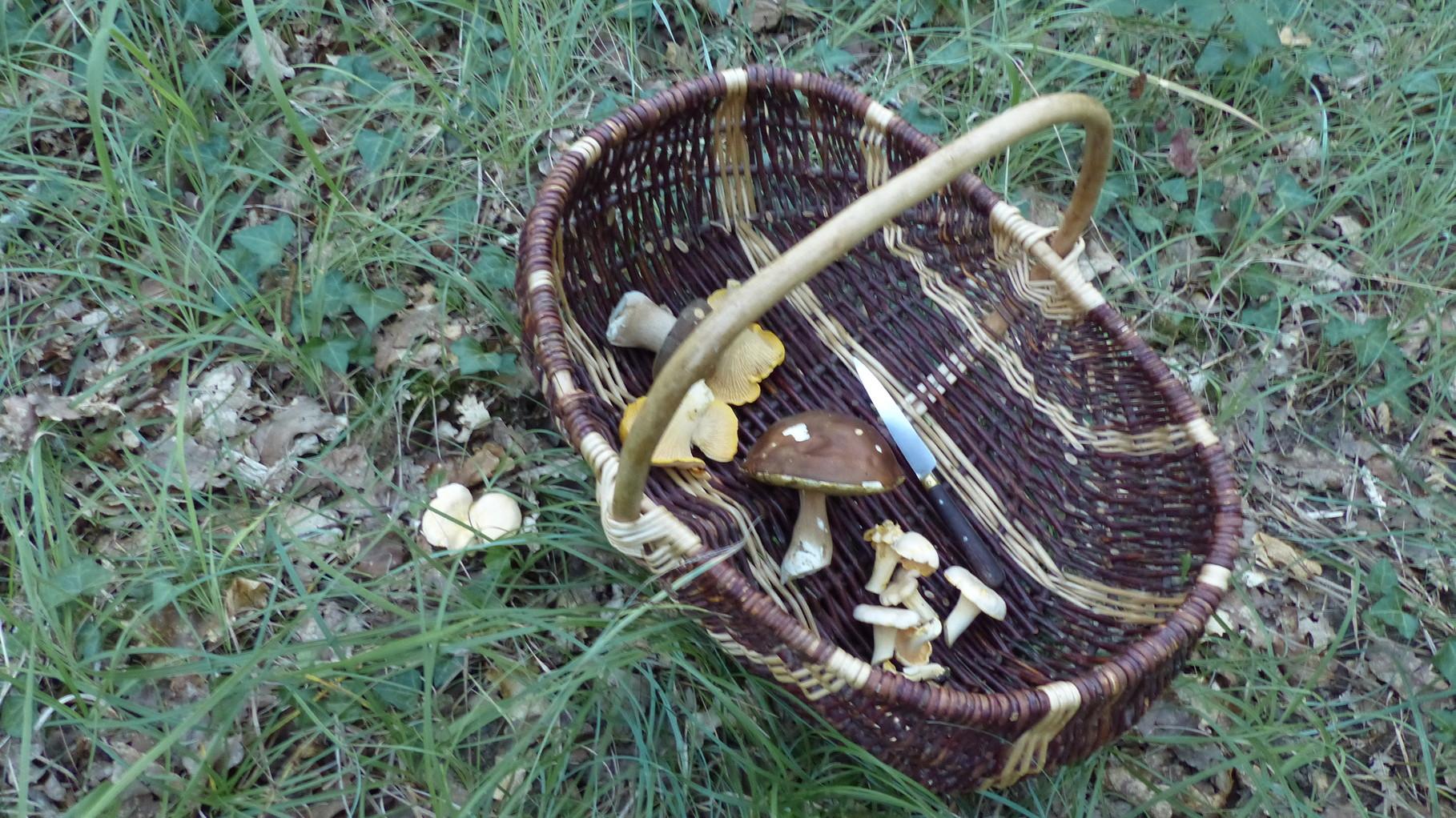 Récolte de champignons