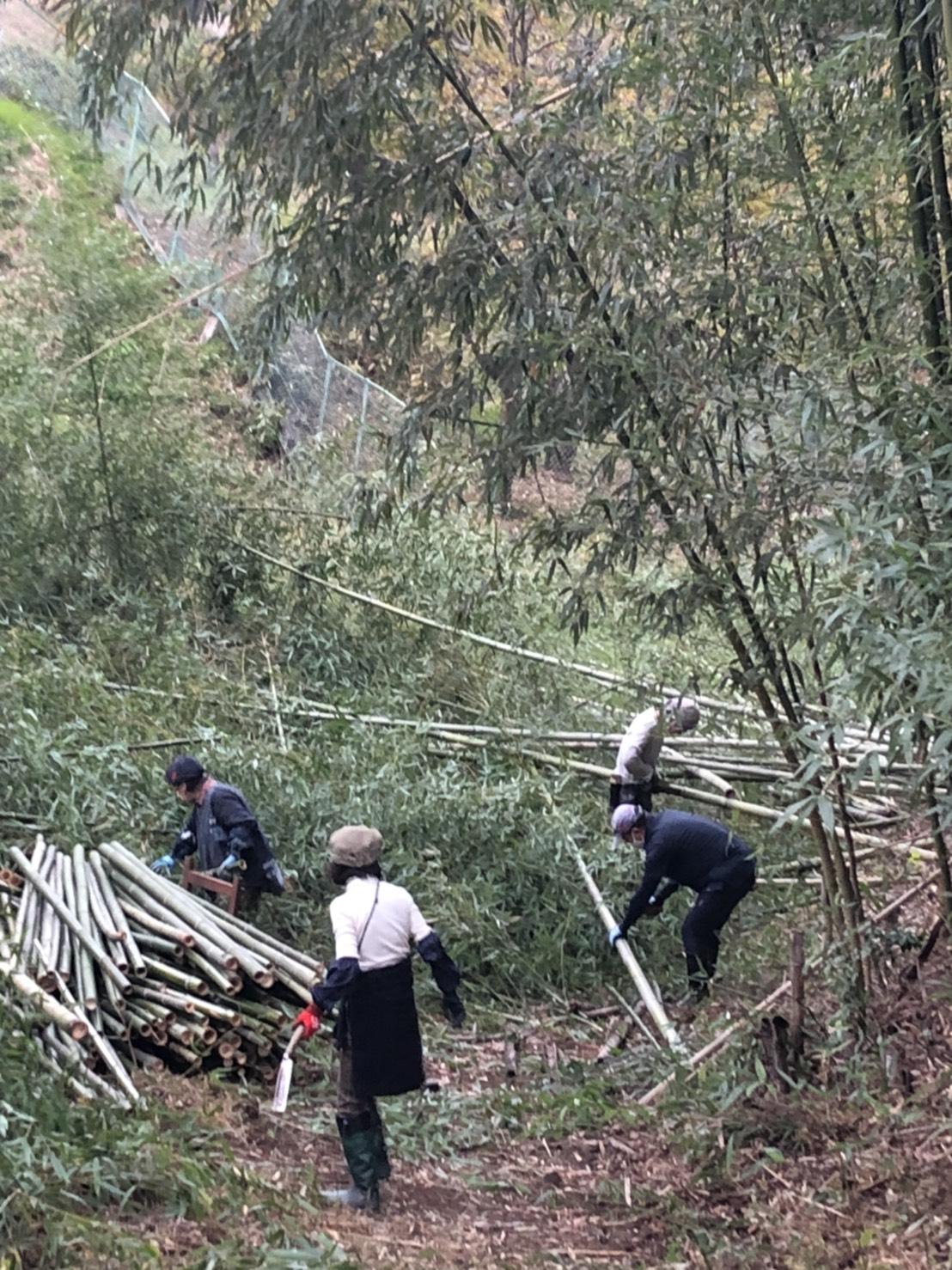 子易の竹藪整備