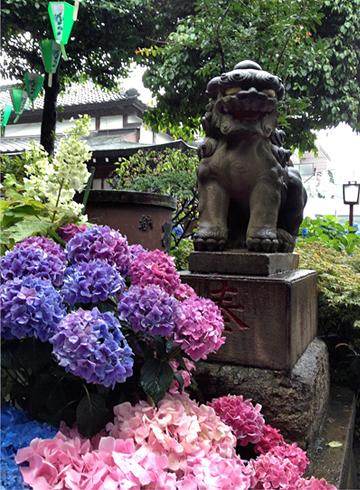 白山神社 狛犬 紫陽花