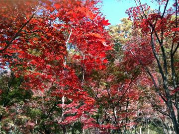 織姫神社 織姫公園 紅葉