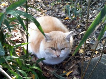 王子神社 猫