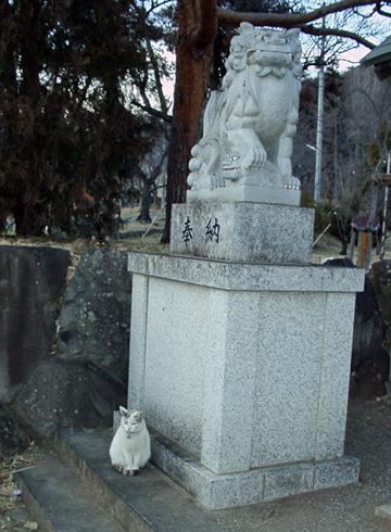 山梨縣護國神社 狛犬と猫