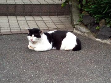 白山神社 猫