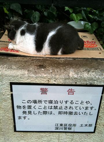 富岡八幡宮 猫