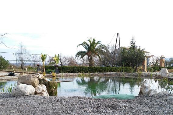 Piscina ecológica en Barcelona