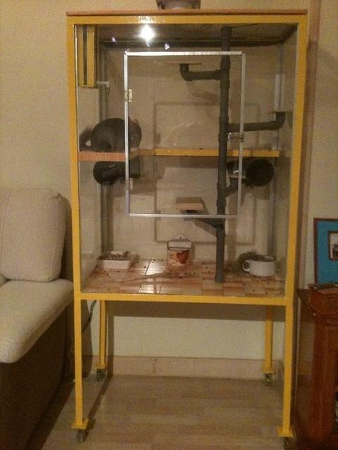 Foto de cortesía de Paola de www.chinchillaspaola.jimdo.com