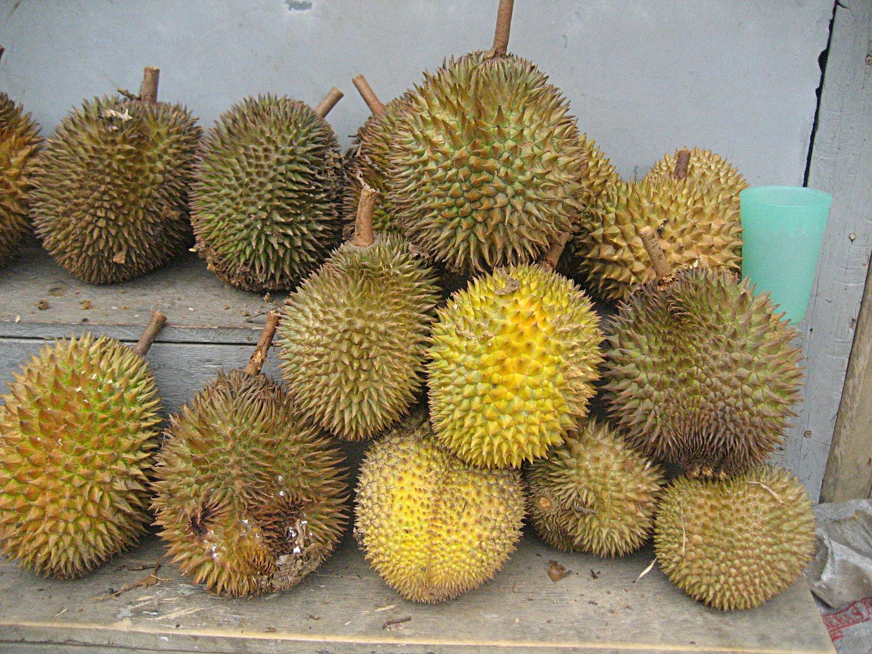 Durian ( Stinkfrucht )