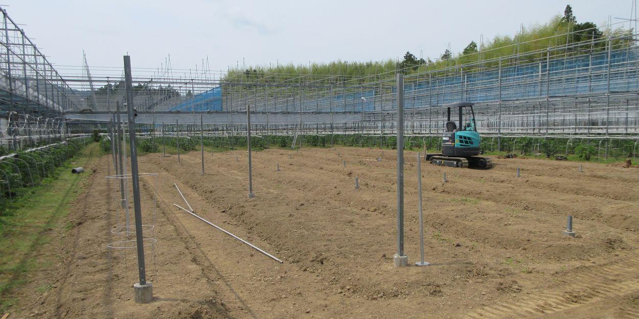 空き地を開墾