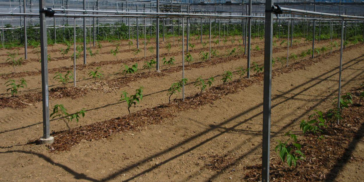 苗を植えて成育を見守る