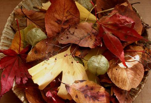 朽葉の盛り合わせ / おひさま皿