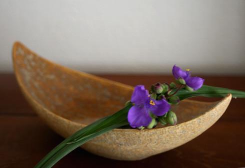 紫ツユクサ / 月形鉢