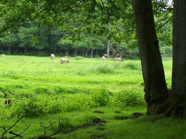 und ein idyllisches Hirsch-Paradies
